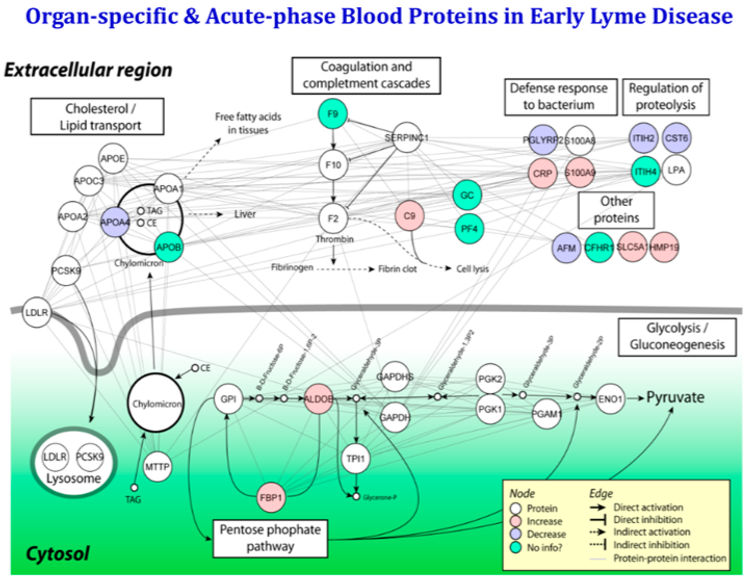 Measurement of Organ-Specific and Acute-Phase Blood Protein Levels in Early Lyme Disease