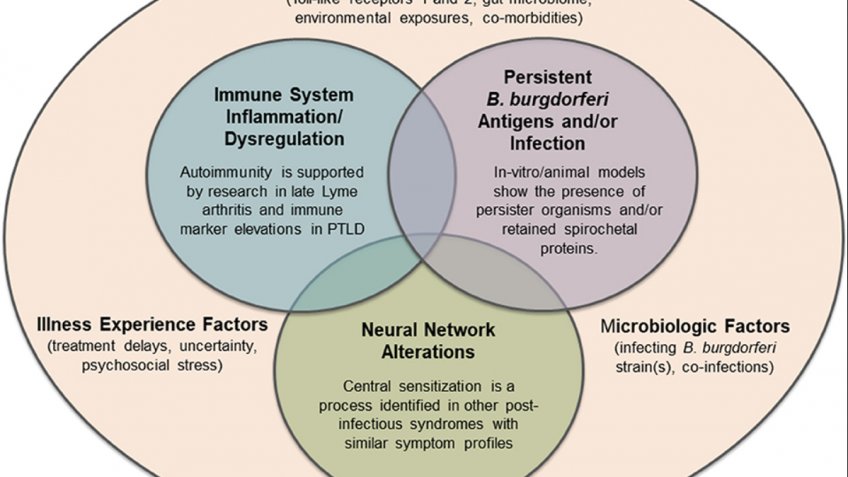 Potential mechanisms of persistent symptoms in Lyme disease